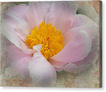 Beauty Woven In Canvas Print by Judy Hall-Folde