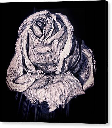 Beauty Wrinkle Canvas Print by Kristi Swift