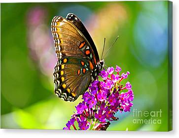 Beautyfly Canvas Print