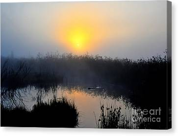 Beaver At Beaver Dam In Morning Canvas Print by Dan Friend