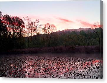 Beaver Marsh Canvas Print by David Yunker
