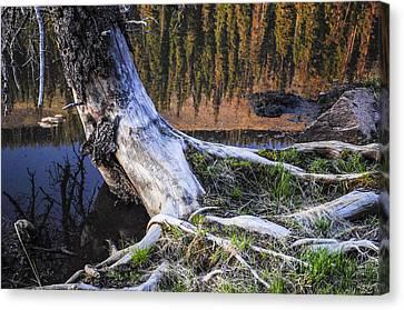 Beaver Pond Reflection 2 Canvas Print