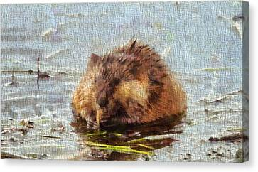 Beaver Portrait On Canvas Canvas Print by Dan Sproul