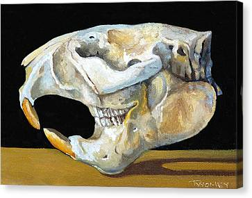 Beaver Skull 1 Canvas Print by Catherine Twomey