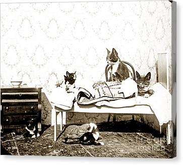 Canvas Print featuring the photograph Bed Time For Kitty Cats Histrica Photo Circa 1900 by California Views Mr Pat Hathaway Archives