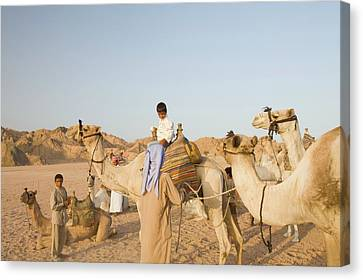 Bedouins And Their Camels Canvas Print