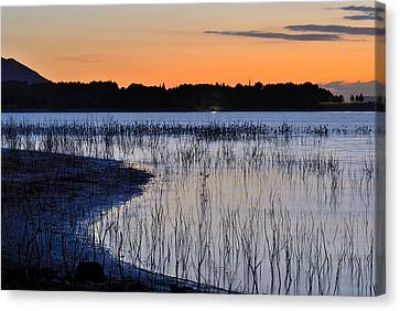 Bedtime. The Cattle Egret Canvas Print by Guido Montanes Castillo