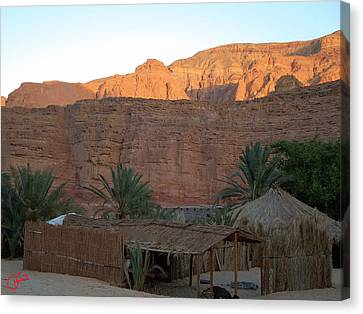 Beduin Camp In The Sinai Desert Egypt Canvas Print by Colette V Hera  Guggenheim