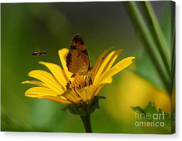 Butterfly In Motion Canvas Print - Bee And Butterfly by Pamela Shane