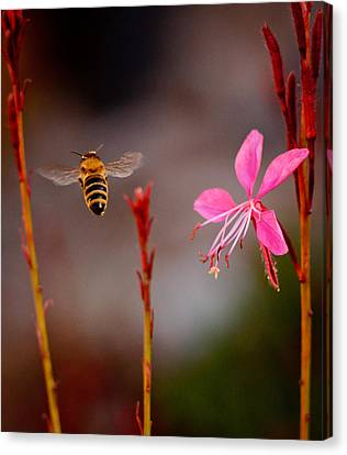 Canvas Print featuring the photograph Bee And Flower by Janis Knight