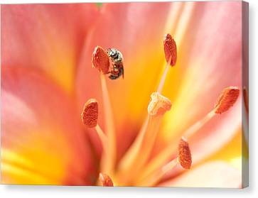 Bee And Lily Canvas Print