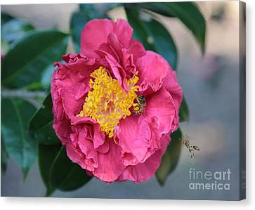 Bee And Wasp On Camellia Canvas Print