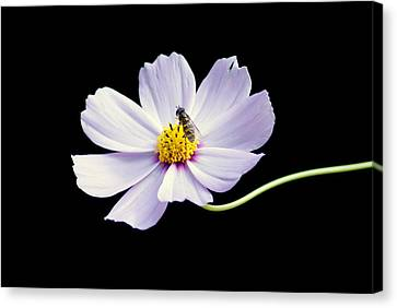 bee and Wildflower Canvas Print