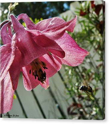 Bee Are You Looking At Me Canvas Print by Barbara St Jean