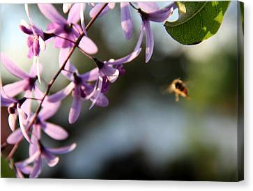 Canvas Print featuring the photograph Bee Back by Greg Allore