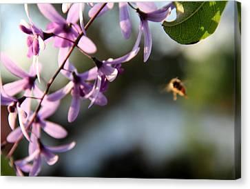 Bee Back Canvas Print