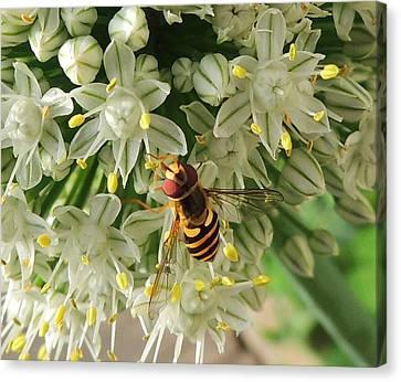 Bee Beautiful Canvas Print by Karen Horn