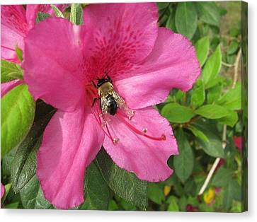 Bee Cause Canvas Print