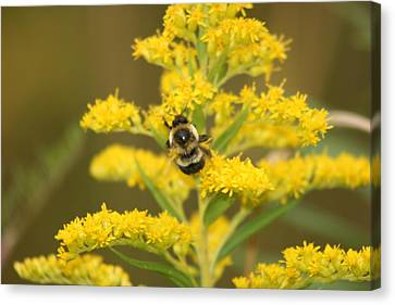 Canvas Print featuring the photograph Bee Closeup by Paula Brown