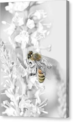 Workings Canvas Print - Bee Collecting Pollen by Tommytechno Sweden