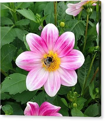 Bee Enjoying Flower Canvas Print