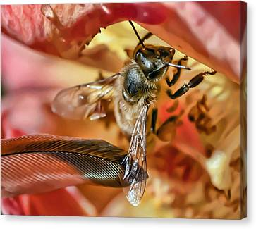 Canvas Print - Bee Gentle by Kenneth Haley
