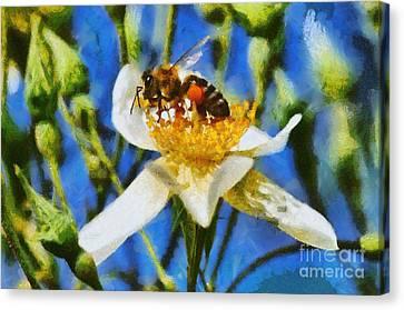 Bees Canvas Print - Bee by George Atsametakis