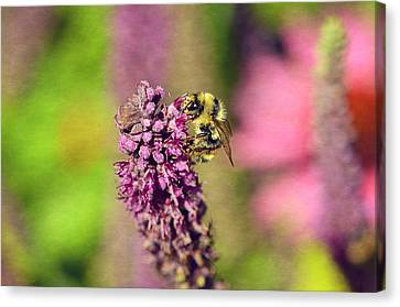 Bee Happy Canvas Print by Maria Angelica Maira