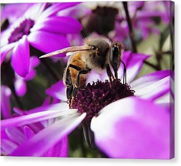 Bee Happy Canvas Print by Norma Brock