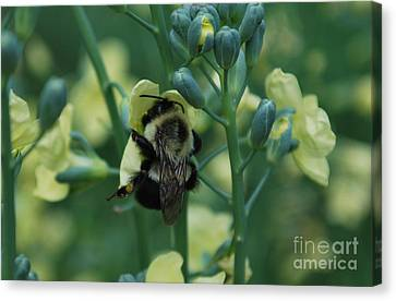 Bee Hugs Canvas Print
