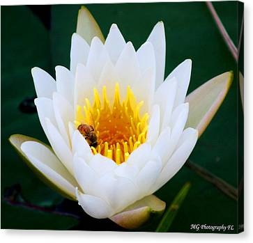 Bee In A Lily  Canvas Print by Marty Gayler