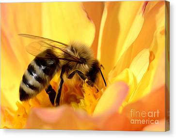 Bee In Flower Canvas Print by Dianne Phelps