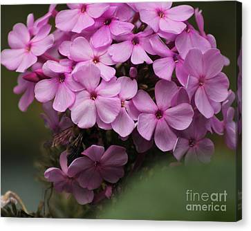 Bee In The Bouquet Canvas Print