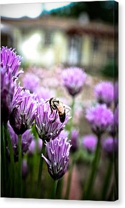 Canvas Print featuring the photograph Bee In The Chives by Joel Loftus