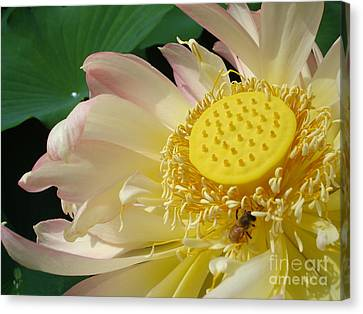 Bee Canvas Print by Jane Ford