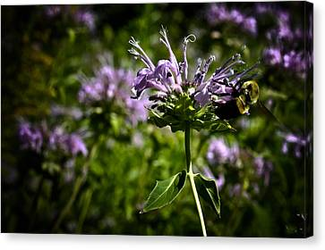 Canvas Print featuring the photograph Bee by Joel Loftus