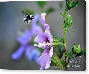 Bee Lavender Canvas Print by Nava Thompson
