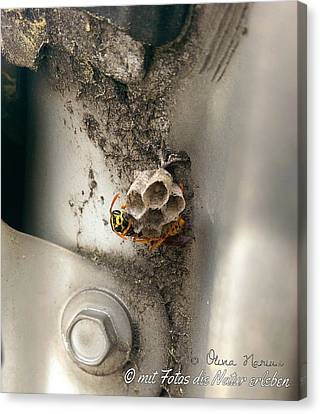 Bee Canvas Print by Olivia Narius