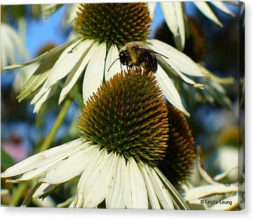 Canvas Print featuring the photograph Bee On A Cone Flower by Lingfai Leung
