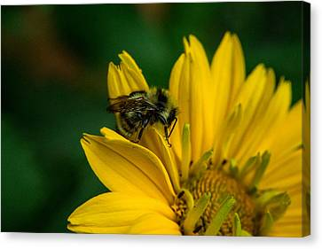 Bee On A Quest Canvas Print