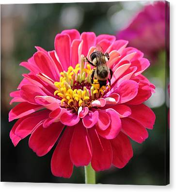 Canvas Print featuring the photograph Bee On Pink Flower by Cynthia Guinn