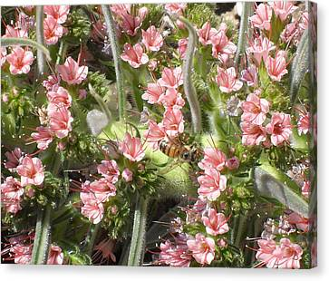 Bee On Pink Flowers Canvas Print by Mark Barclay