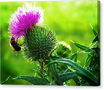 Bee On Thistle Canvas Print by Joy Nichols