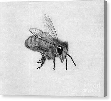 Bee Pencil Drawing Canvas Print by Dan Julien