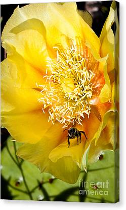 Bee Stands Guard Canvas Print