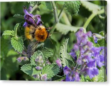 Canvas Print featuring the photograph Bee Too by David Gleeson