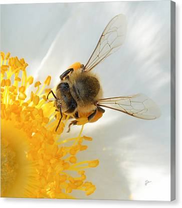 Bee-u-tiful Squared Canvas Print by TK Goforth