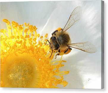 Bee-u-tiful Canvas Print by TK Goforth