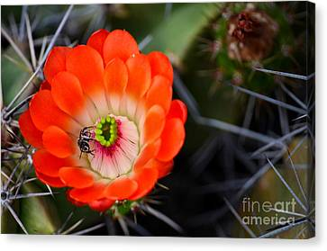 Bee Ware The Thorns Canvas Print by Deb Halloran