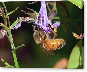 Canvas Print featuring the photograph Bee With Flower by Ron Roberts